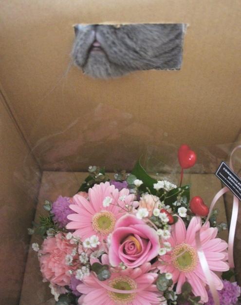 8)お花ぢゃーん