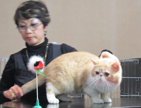 13)黒レンジャーさんとガンモ