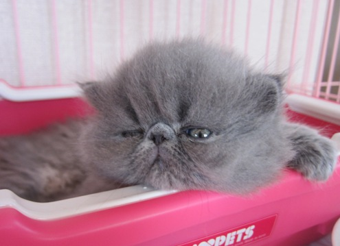 14)眠たい小丸ちゃん