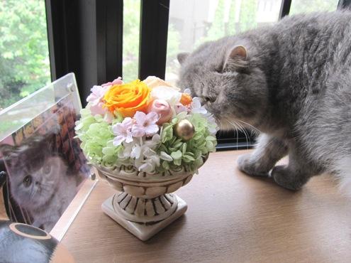 10)魅威太さんからのお花