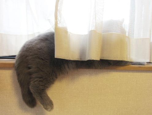 11)窓辺の〇太