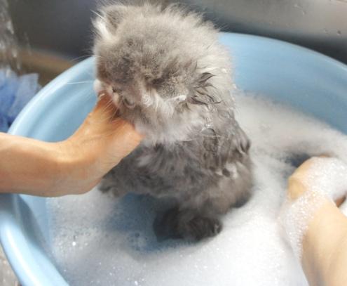3)そっと浸けるとじっとしてるマルタjr.ちゃん