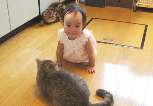 18.2)猫大好きtumyちゃん