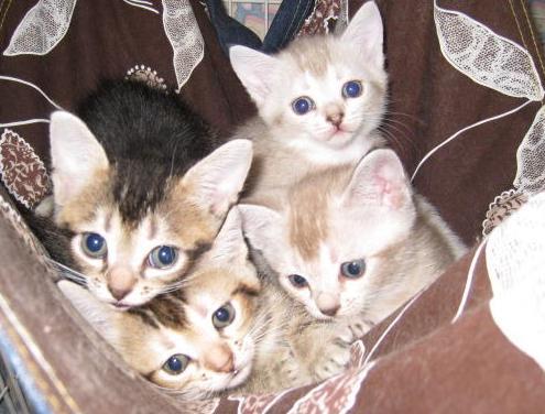 11.5)ハーフの猫ちゃんたち