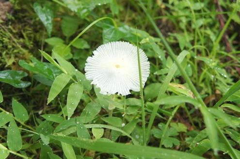 10)お花のようなキノコちゃん