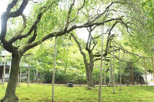 10)常照皇寺お庭
