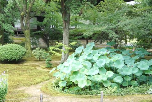 15)広隆寺の蓮