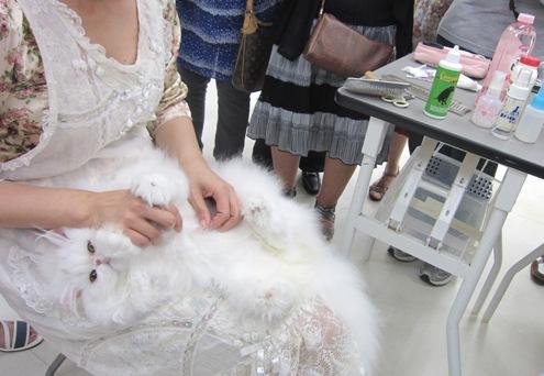 8)毛玉を裂きます