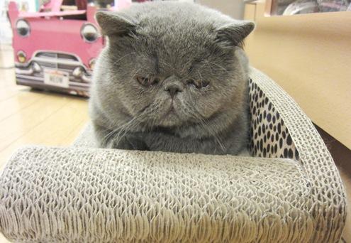 モデルの猫ちゃんって。