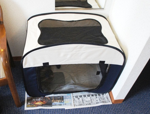 0)うずらちゃんのテント
