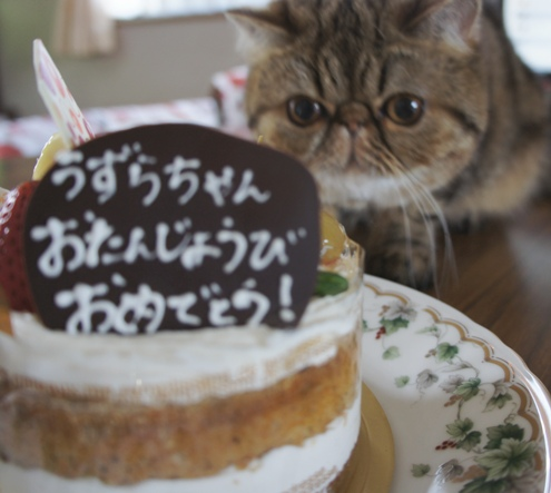 14)食べるでぷ!