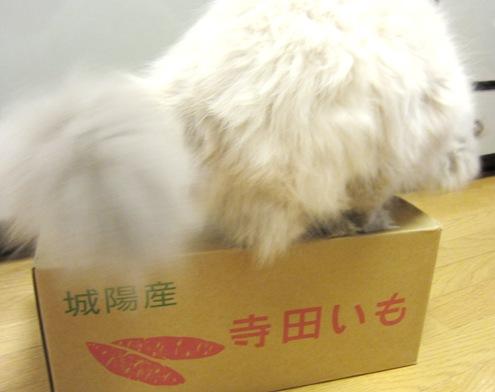 7)ねーちゃんのニオイはないじょ~