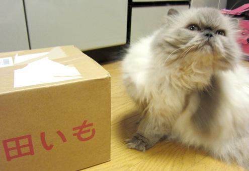 9)根気のないてんちゃん(笑)