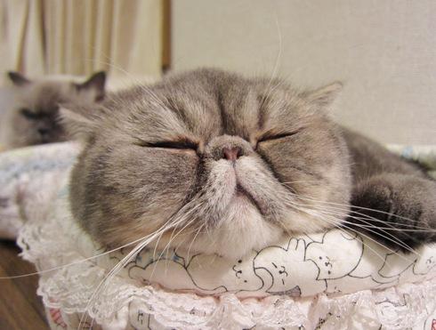2)寝たふりでちよ