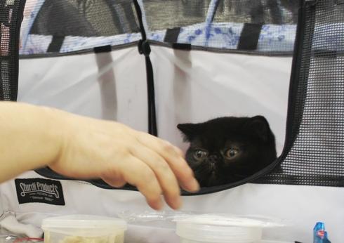 7.2)黒猫ちゃん見つけたー!
