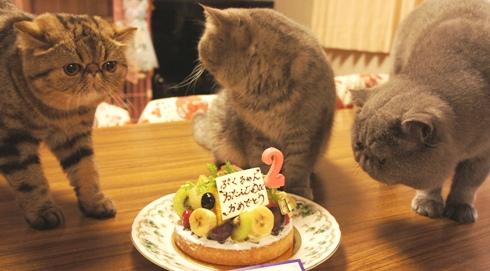 19)ケーキちゃんンスですよー!
