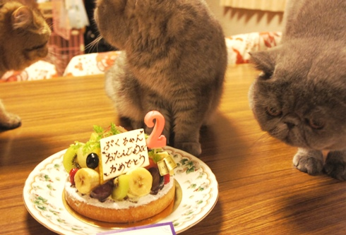 20)食べちゃうですよー!