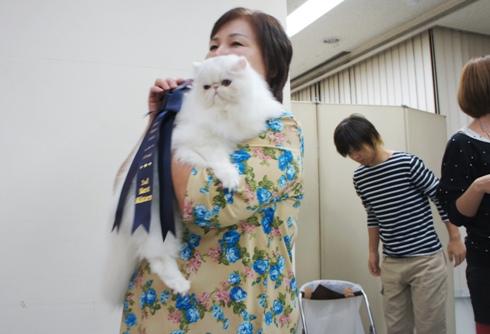 33)ホワイトローズちゃんサードキツン