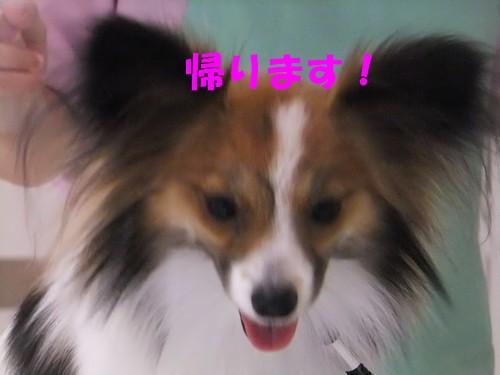 4_20120314210850.jpg