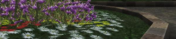 【花取り見取り】