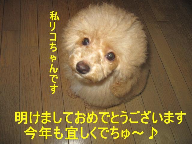 IMG_3094.jpg