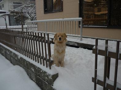 QAT看板犬凪弥の誕生日