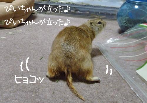 20110330のぴいちゃん2