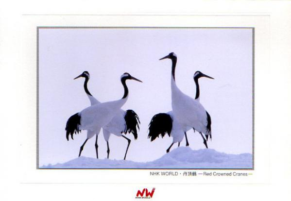 2006年 NHK WORLD (Radio Japan) 年賀状