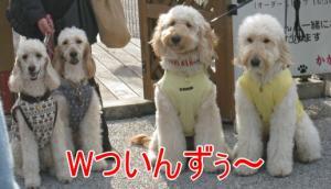 2010+10+001_convert_20101204061455.jpg
