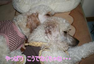 2010+10+024_convert_20101018093636.jpg