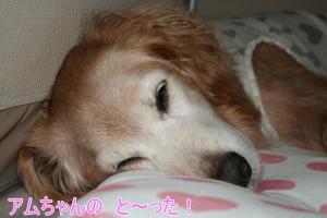 2010+10+042_convert_20101018093809.jpg