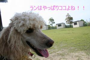 繝峨ャ繧ッ繝ゥ繝ウ+110_convert_20100512223229