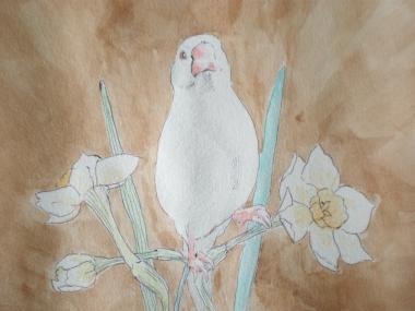 「文鳥王」 自画集11