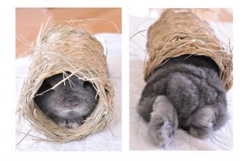 pooh in tube fc2