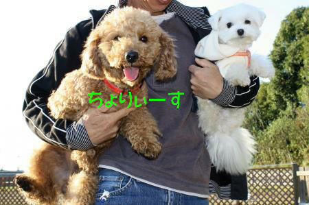 033_convert_20091123191426.jpg