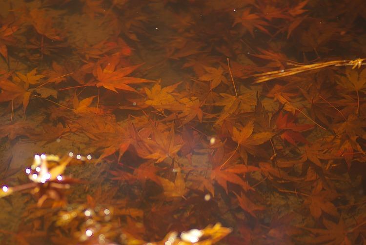 今年の紅葉風景 5