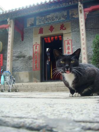 マカオのお寺?と猫
