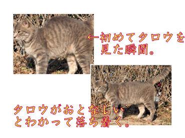 猫コーフン