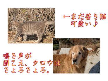 猫とタロウ
