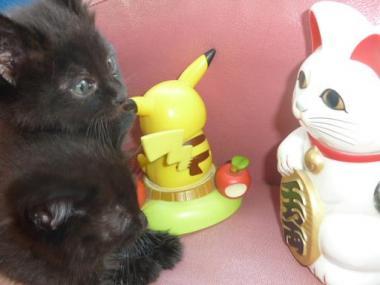 招き猫~1