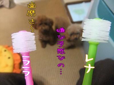 9.25歯ブラシ