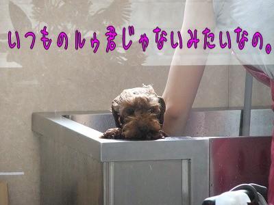 7.7ララ入浴中