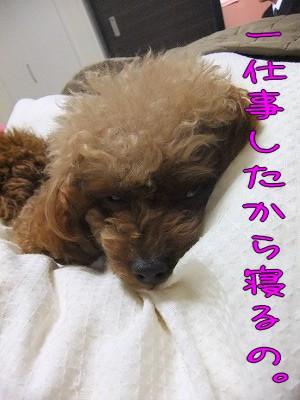 5.1眠い