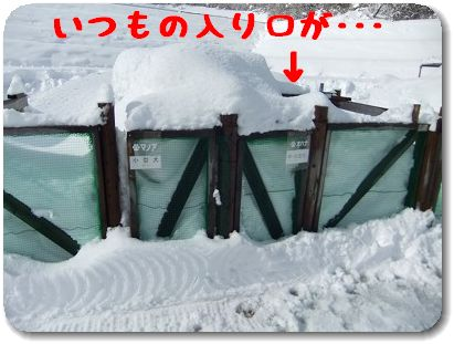 1.19雪
