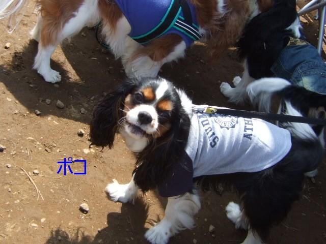 2010.4.11(葛西BBQ) 094