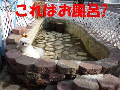 taro0912113_convert_20091231183621.jpg