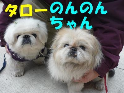 taro100114_convert_20100103210628.jpg