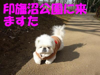 taro100136_convert_20100104212926.jpg