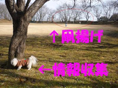 taro100141_convert_20100104213314.jpg
