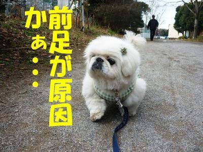 taro100148_convert_20100105203138.jpg